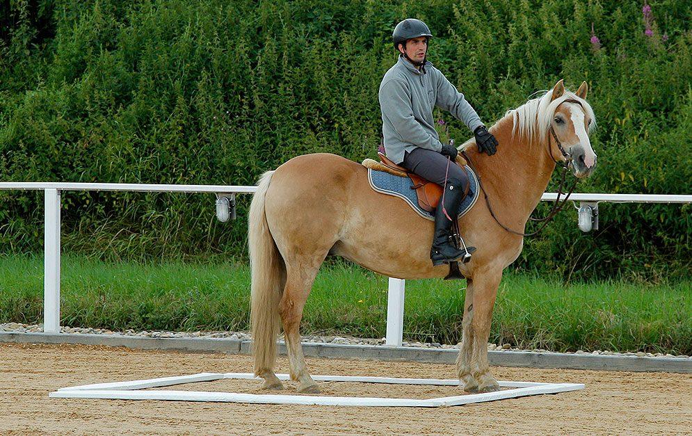 Diese Übung eignet sich sowohl für Anfänger als auch für fortgeschrittene Reiter und Pferde.