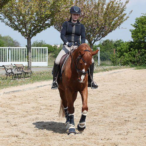 Um die Stellung und Konzentrationsfähigkeit deines Pferdes zu verbessern, eignet sich diese Reitübung besonders gut.