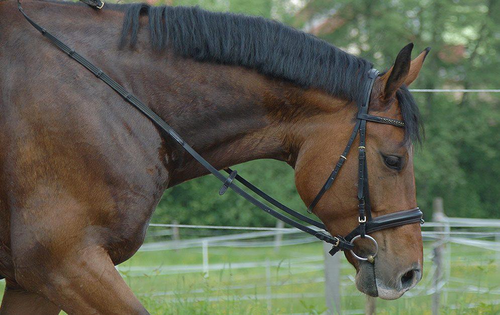 In dieser Reitübung kannst du mit deinem Pferd das Reiten von engen Wendungen üben. Vor allem für Western-Reiter ist diese Übung interessant, da sie Bestandteil von einigen Prüfungen ist.