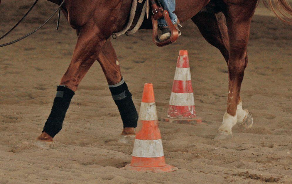 Reitübung - Hütchenwald: Einfacher Aufbau, hoher Nutzen. Verbessere die Aufmerksamkeit deines Pferdes durch neue und ungeübte Hufschlagfiguren.