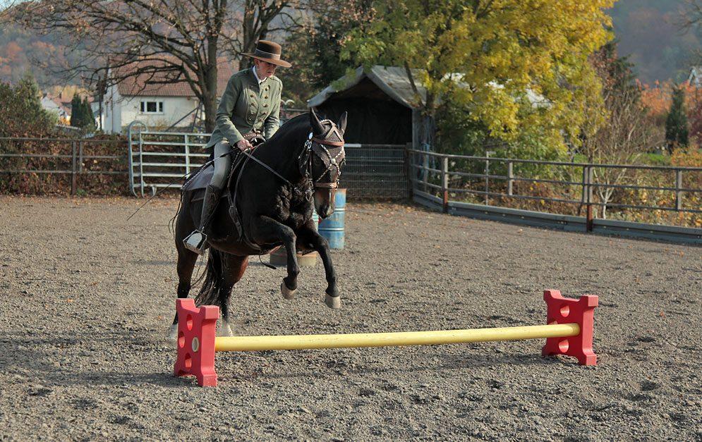Reitübung Galopp-Parcours: In dieser Reitübung lernen Pferd und Reiter, enge Wendungen im Galopp flüssig zu nehmen und sich Wege auf Sprünge besser einzuteilen.