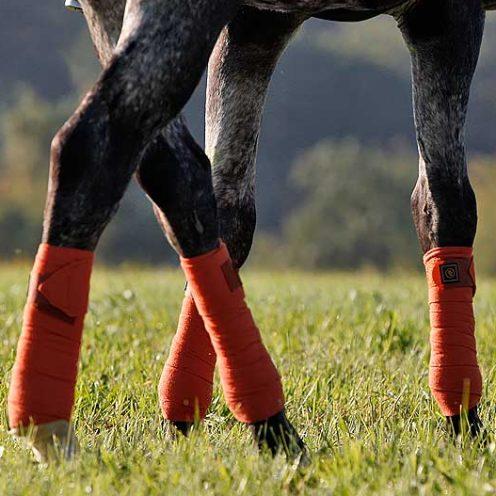 Unsere Reitübung - Hinterhand verschieben: Mit dieser Reitübung kannst du u.a. den Schritt deines Pferdes verbessern.