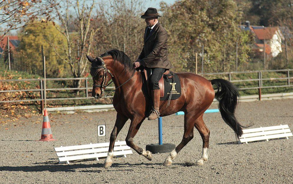Reitübung: Vorbereitung zur Galopp-Pirouette. Freue dich auf zwei Übungen, die dein Pferd und dich auf die Galopp-Pirouette vorbereiten.