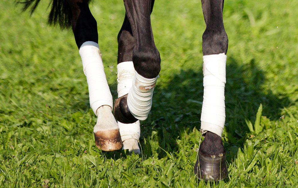 Reitübung Zirkeltraining auf dem Zirkel: Lieblingsübungen als Motivation! Viele Pferde entspannen sich im Galopp – warum also nicht öfter eine Galopparbeit ins Training einbauen?!