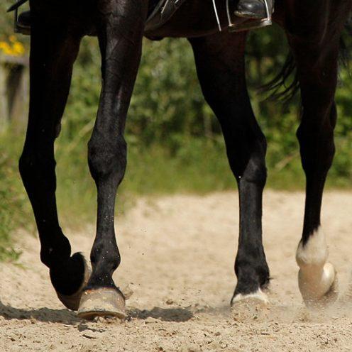 Reitübung Zirkeltraining: Mit dieser Übung kann die Rittigkeit und Durchlässigkeit des Pferdes gesteigert werden.