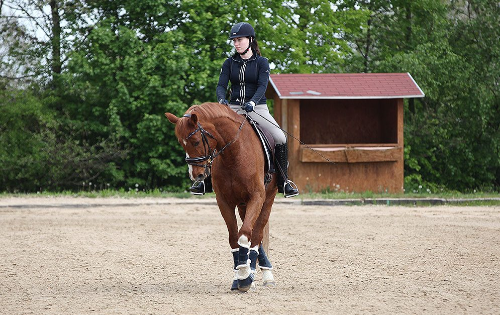 In dieser Reitübung gymnastizieren und trainieren wir das Pferd mit Hilfe von Schulterherein und Traversale kombiniert in einer Übung.