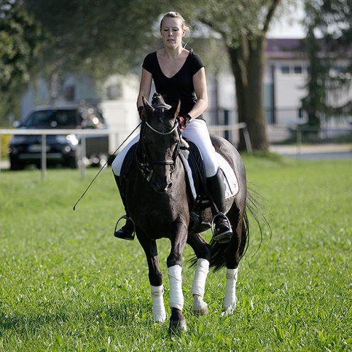 Beginne mit den Seitengängen! Dadurch bekommt dein Pferd mehr Kraft und beginnt, sich zu versammeln.