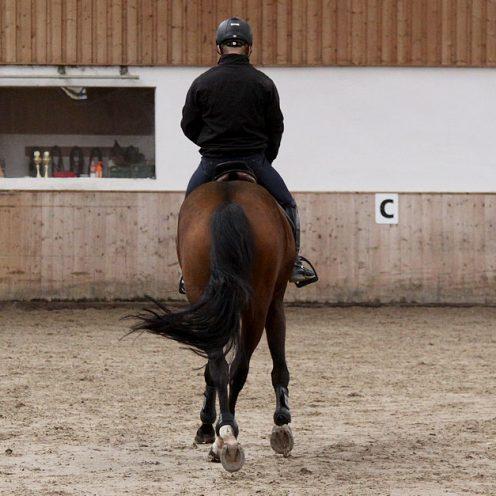 Das Viereck verkleinern und vergrößern ist eine Lektion, die in A-Dressuren abgefragt wird. Sie überprüft den Gehorsam und die Durchlässigkeit der Pferde.