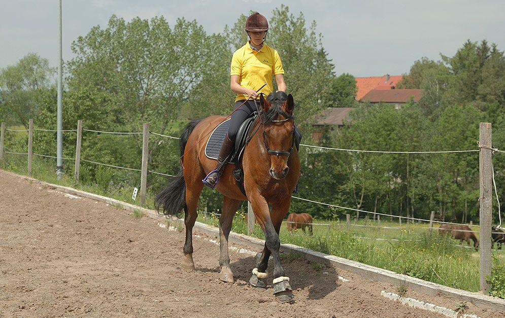 Kombiniere die Seitengänge Schulterherein und Traversale in einer Übung und überprüfe so Durchlässigkeit und Rittigkeit deines Pferdes. Wir zeigen dir, wie es ganz einfach geht.