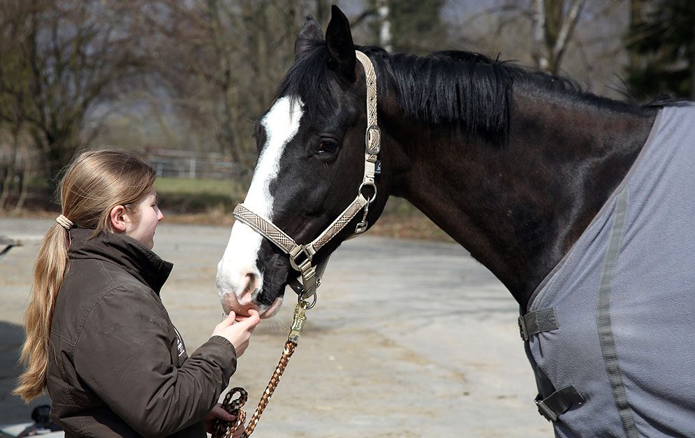Pferdekaufvertrag: Vorbereitung ist alles! Beim Pferdekauf ist einiges zu beachten – um dich hierbei zu unterstützen, haben wir zwei Muster-Kaufverträge für dich erstellt, die du dir zur Orientierung herunterladen kannst.
