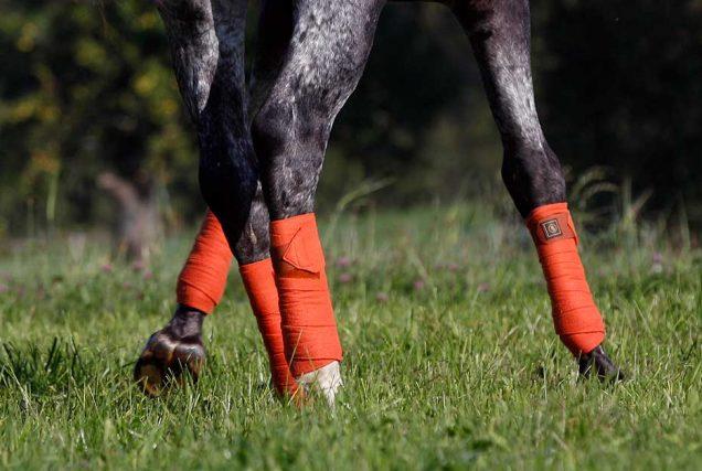 Reitübung: Aktive Pferdebeine