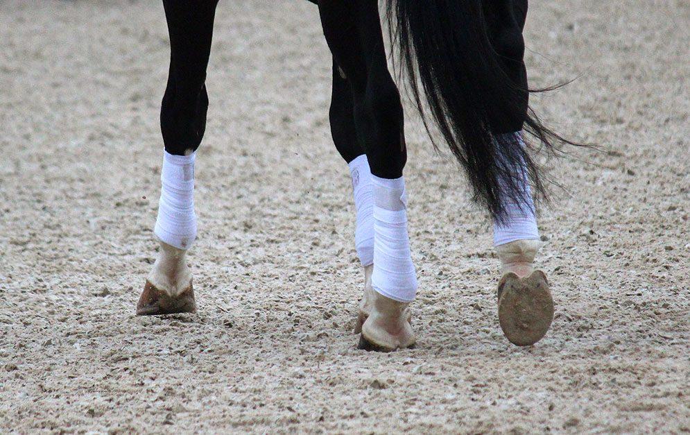 Reitübung - Aufwölben der Lende: Durch das Reiten dieser Übung wird das Pferd die Lende aufwölben, was eine spür- und sichtbare Verbesserung des Schritts mit sich zieht.