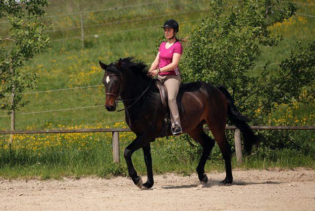 Reitübung: Volten und Schenkelweichen. In dieser Reitübung lernen Pferd und Reiter mit Hilfe von Volten und Schenkelweichen die Muskulatur im richtigen Moment an- und abzuspannen.