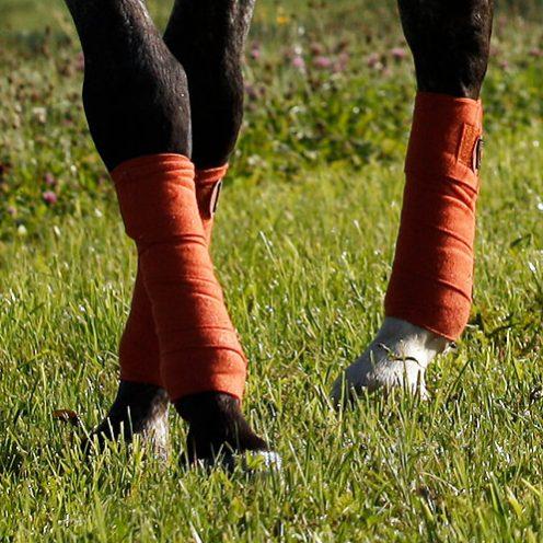 Reitübung Vorhand verschieben: Steigere die Durchlässigkeit deines Pferdes und verbessere das Zusammenspiel deiner Hilfen.