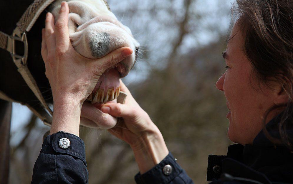 Tierleid durch falsche Diagnose: Warnung der Bundestierärztekammer! Die Behandlung kranker Tiere durch selbsternannte Tierheiler kann fatale Folgen haben. Wir klären dich auf!