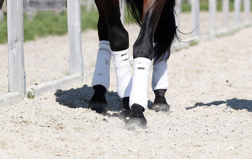 Lass dein Pferd tanzen! Kombiniere einfach die Vor- und Hinterhandwendung und du bekommst eine effektive Übung.