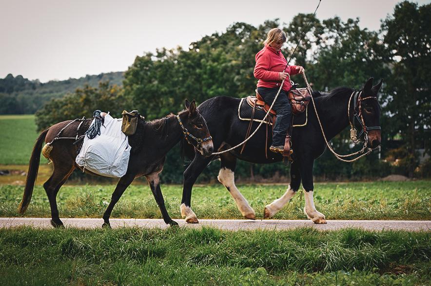 Mulis brauchen weniger Wasser als Pferde und sind sehr ausdauernd.