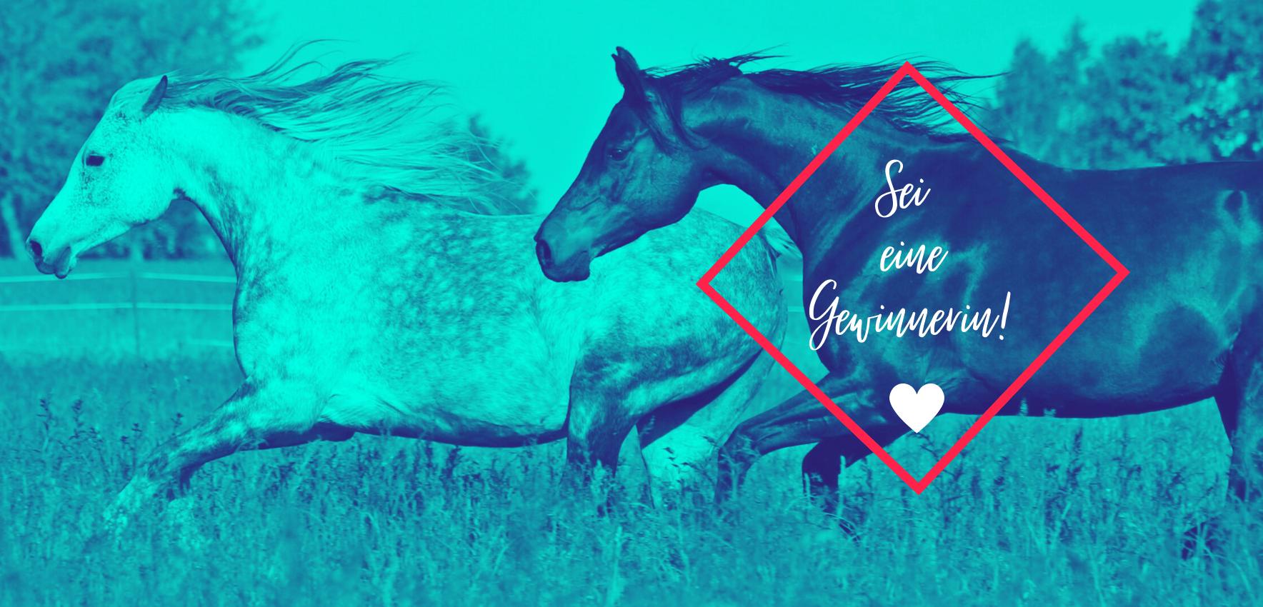 Als PferdeMagazin-Mitglied hast du die Chance, an exklusiven Gewinnspielen teilzunehmen. Werde kostenlos bei uns Mitglied und profitiere!