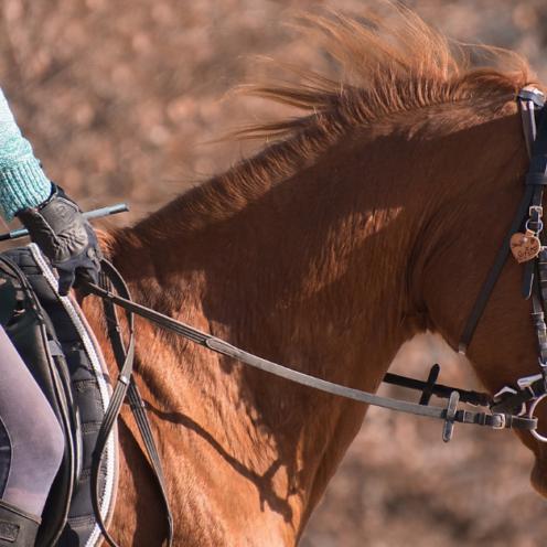 Eiliges oder faules Pferd? Oft liegt's an der Balance, denn die fehlt vielen Pferden. Mit dieser Reitübung hilft du deinem Pferd, besser im Gleichgewicht zu gehen.