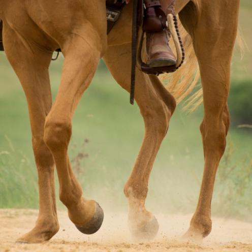 Der Takt ist zurecht der erste Punkt der Ausbildungsskala - denn auch bei bereits ausgebildeten Pferden schadet es nie, sich ab und zu wieder verstärkt der Basis zu widmen.