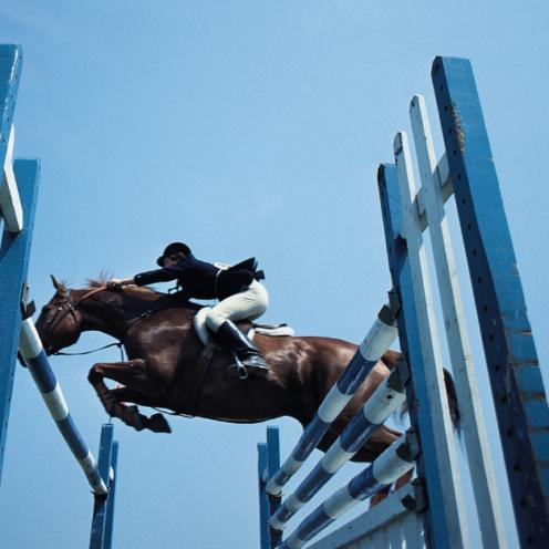 Im Laufe der Jahre sind im Reitsport viele spannende und aufregen Dinge passiert. Überragende Leistungen, Meilensteine, Pferde mit Löwenherz - das musst du wissen!