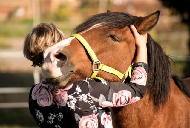 Mit diesen Handgriffen entspannst du dein Pferd garantiert und machst es locker bis in die letzte Haarspitze - Pferde-Wellness vom Feinsten!