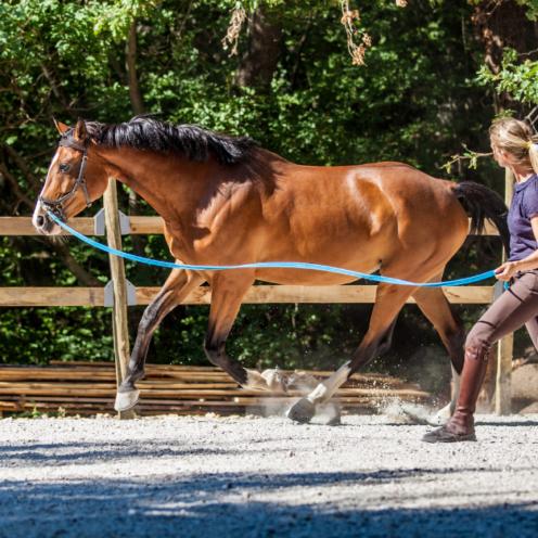 Longieren ist langweilig? Nicht, wenn man es kreativ angeht! Diese Übung kannst du zwischendurch einfließen lassen, um die Neugierde deines Pferdes zu wecken.