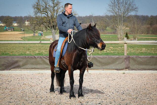 ▶   Für Pony Granada beginnt der dritte Tag im Beritt. Zunächst testet Trainer Markus Stoß, ob sie sich vom Boden aus konzentrieren kann und steigt dann auf.