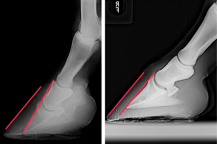 Links: So sieht eine Hufrehe auf dem Röntgenbild aus. Rechts ein normaler, gesunder Huf.